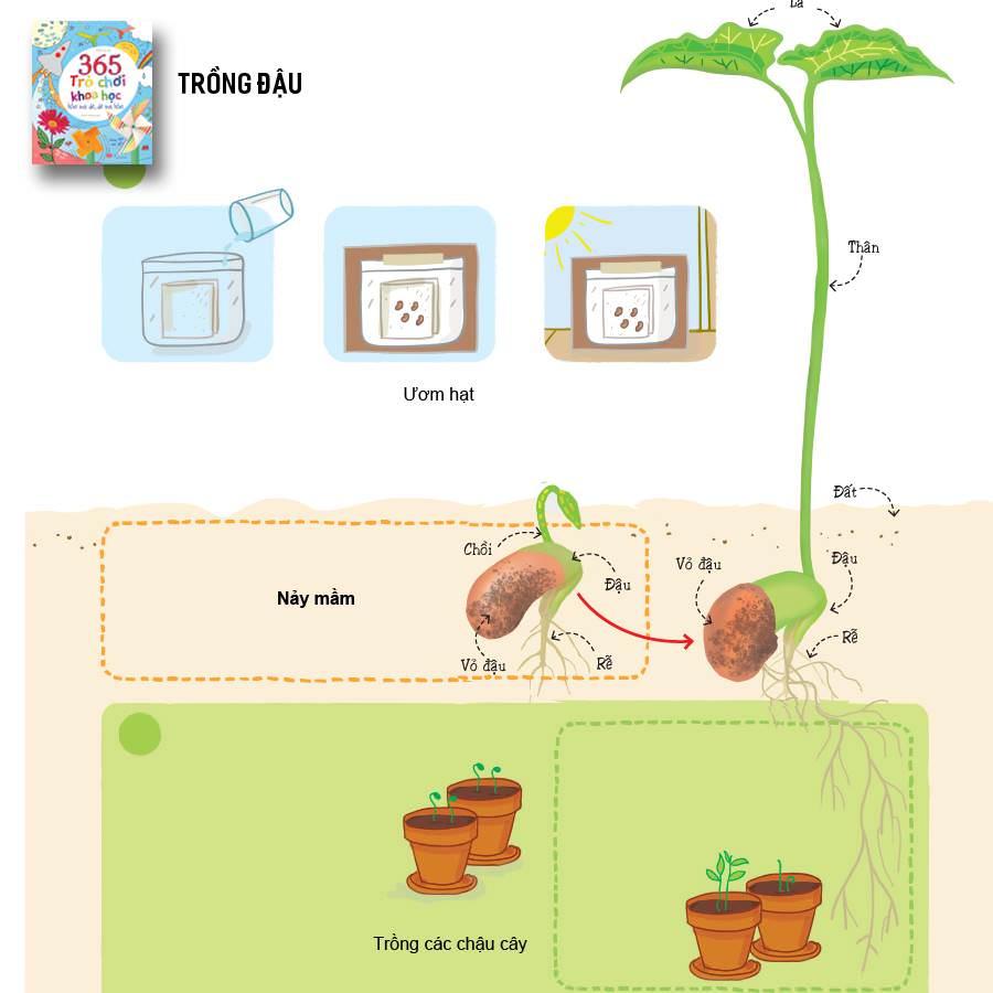 Trò chơi khoa học cho bé mầm non: Trồng hạt đậu